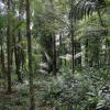 Seminário Proteção da Amazônia